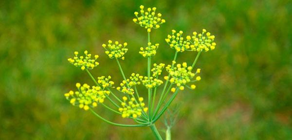 75-Plantas-melhorar-astral(FuturaAmbientes)_7