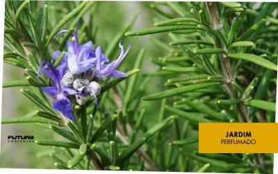 10 flores para perfumar e encantar o jardim da sua casa!
