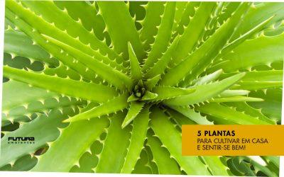 Sinta-se bem com 5 plantas para cultivar dentro de casa