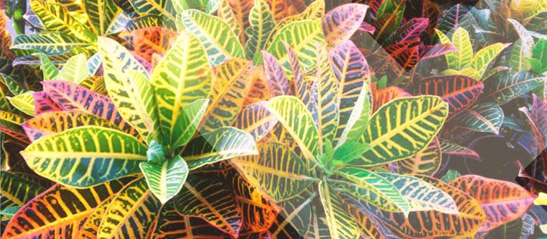Quais plantas posso cultivar dentro de casa